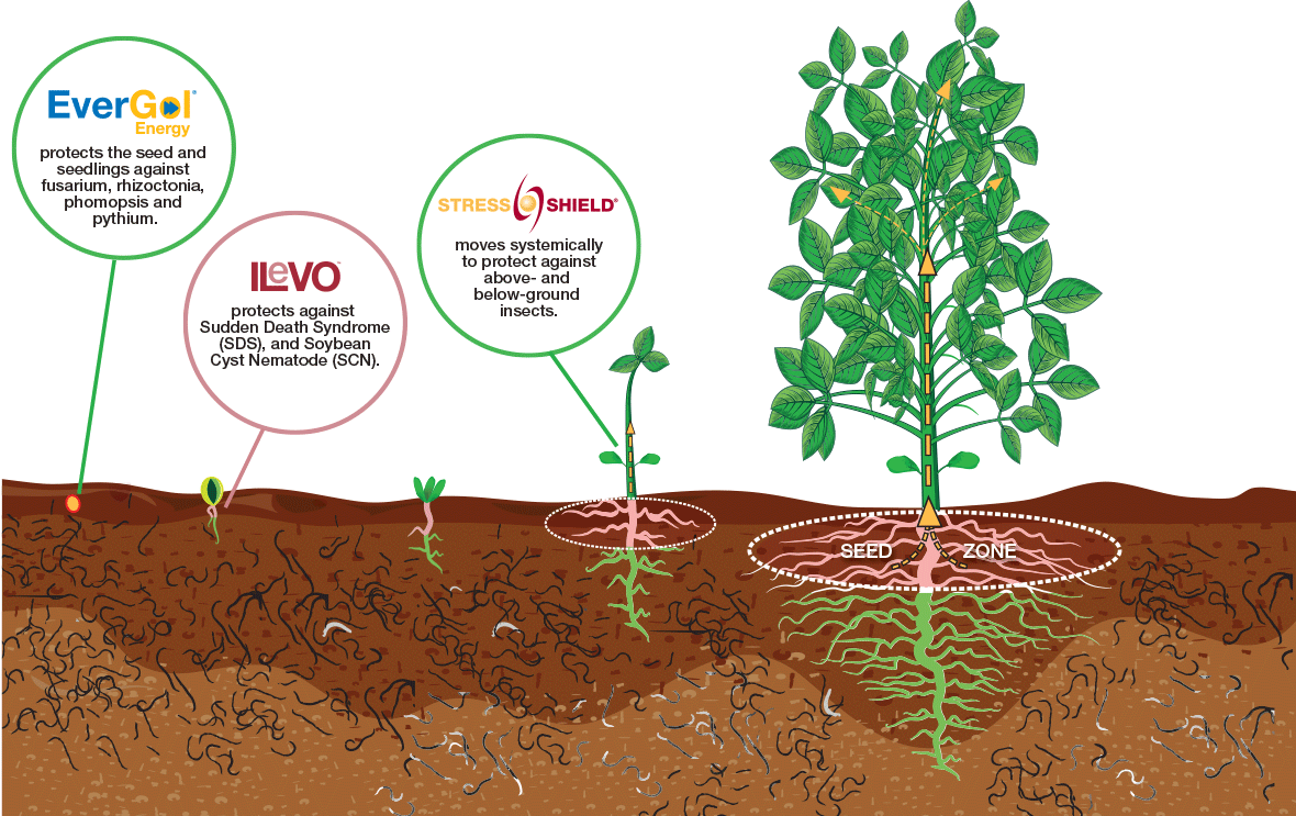 EverGol Energy, ILeVO, and Stress Shield treatment of soybeans