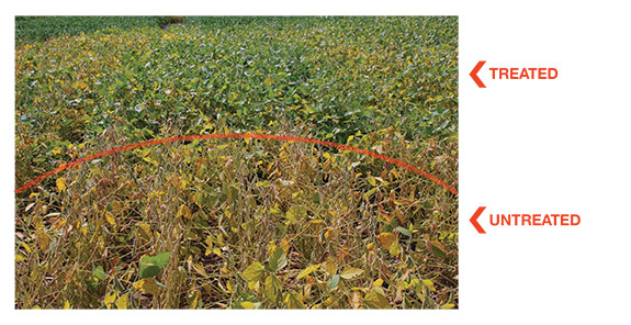 soybean sudden death syndrome (SDS)