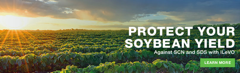 Protect your soybean yield. Against SCN and SDS with ILeVO