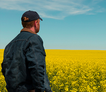 Farmer overlooking canola field - TruFlex™ Canola:  Oh, The Difference A Rate Makes article image