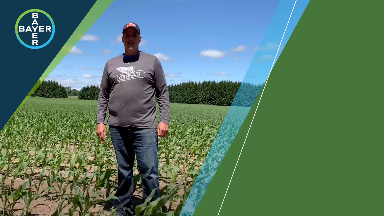 Image of Todd Woodhouse standing in a corn field talking about seed scripting with Climate Fieldview.