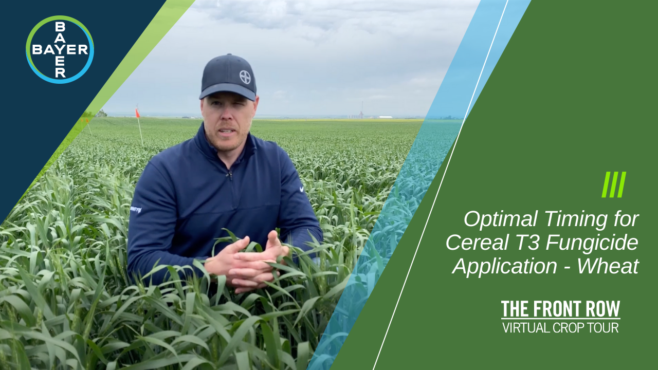 Image of Rory Cranston discussing optimal timing for your cereal T3 fungicide application to ensure you're making the most of your wheat crop.