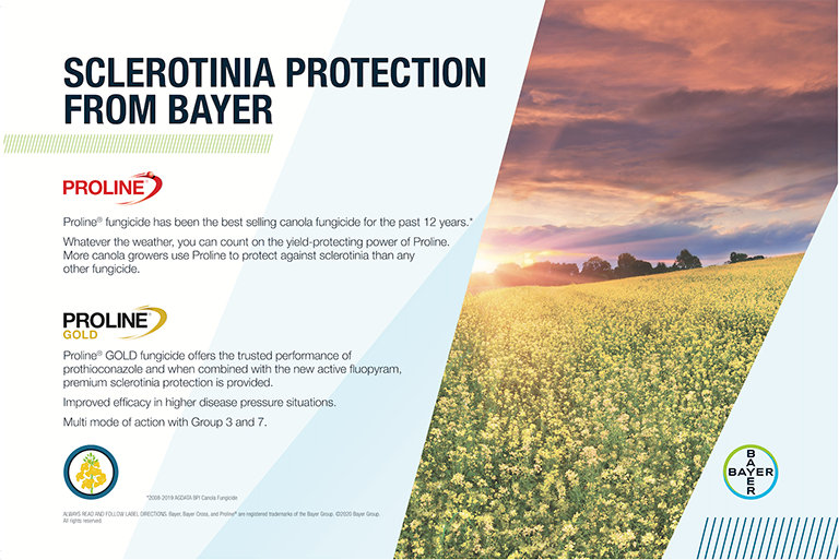 Proline protects from sclerotinia feature image