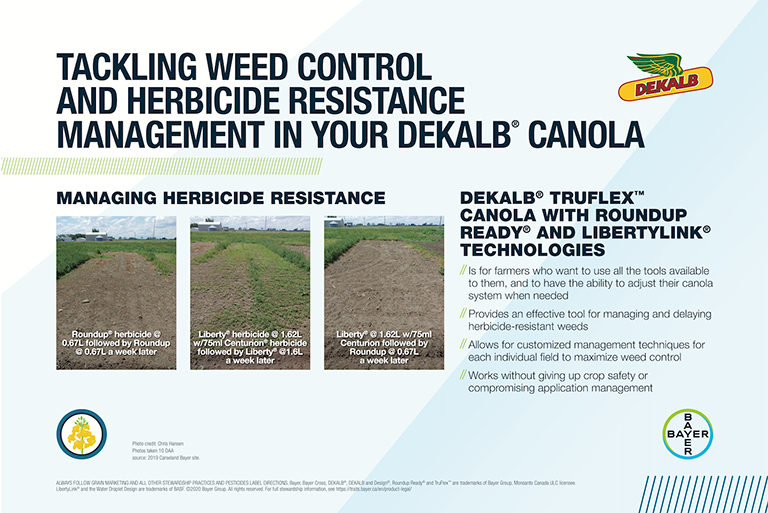 Tackling weeds with DEKALB Canola feature image
