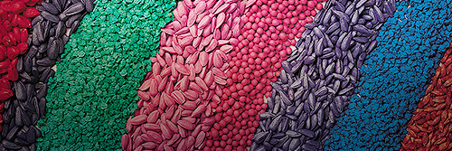 Crop seeds protected with colourful seed treatments from Bayer.