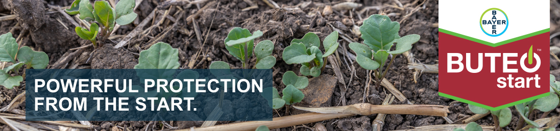 BUTEO™ start – canola seed protection – header image