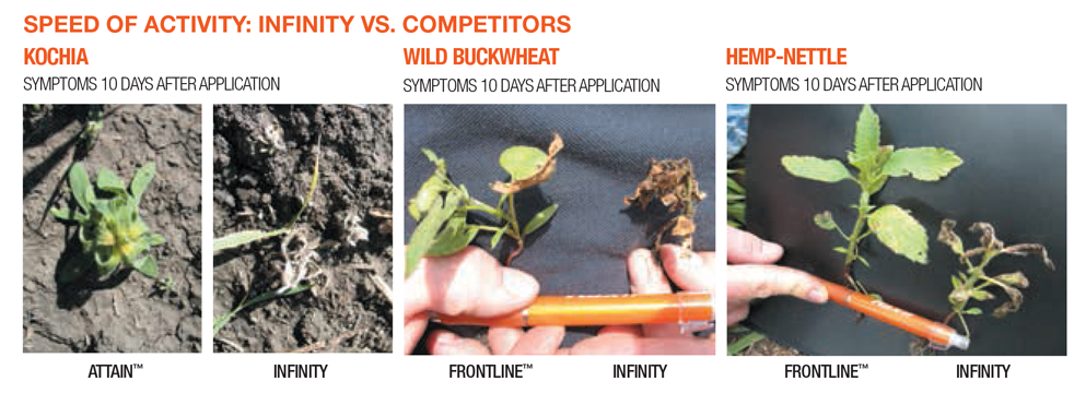 Speed of Activity: Infinity VS. Competitors