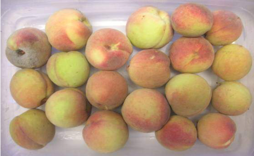 Peaches treated with Luna Sensation fungicide
