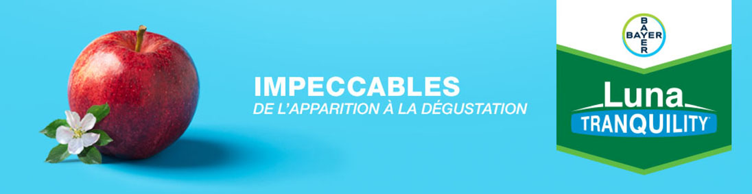 Impeccables de l'apparition a la degustation - Luna Tranquility