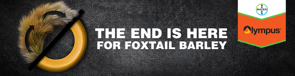 Bayer Olympus Herbicide - The End is Here for Foxtail Barley