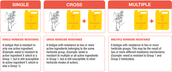 Single, cross, and multiple herbicide resistance chart