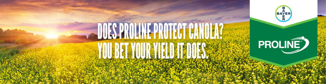 Does Proline Protect Canola? You be your yield it does. | Proline