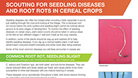 Spotting seeding disease