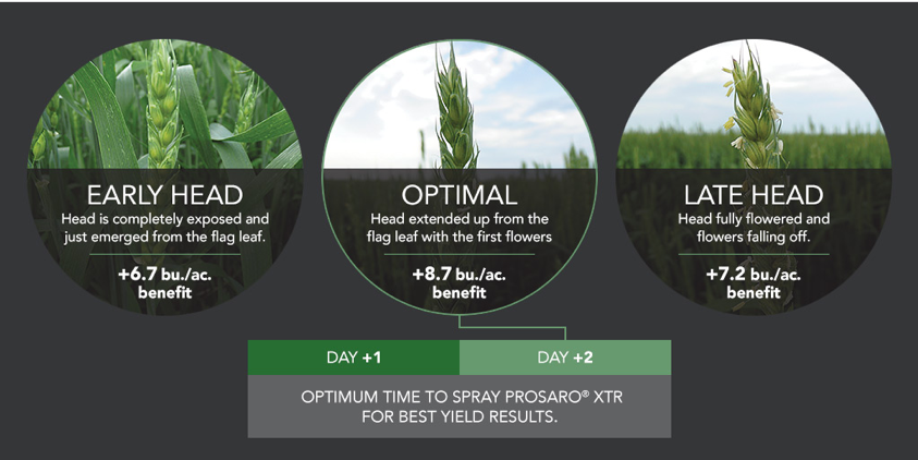 Identifying the optimal time to spray fungicide can increase your yield.