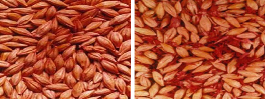 Example image: Cleaned seed (left) and Dirty seed (right)