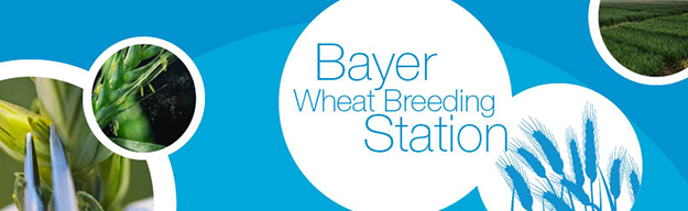 Bayer Wheat Breeding Station