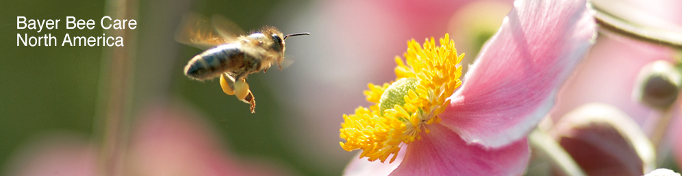 bee care banner