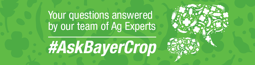 Ask Bayer FAQs