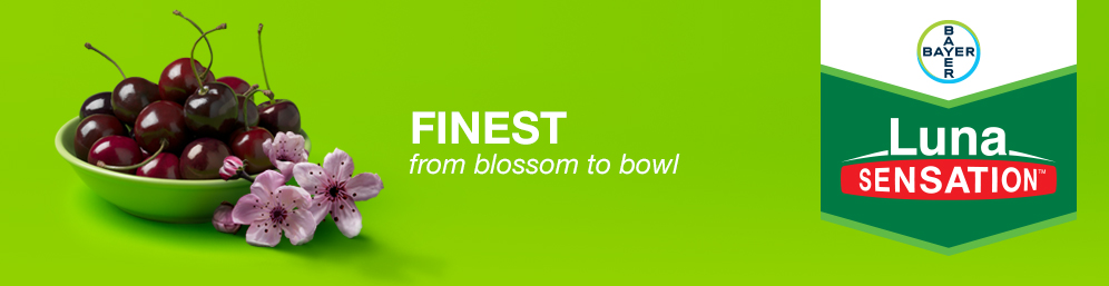 Luna Sensation - Finest from blossom to bowl