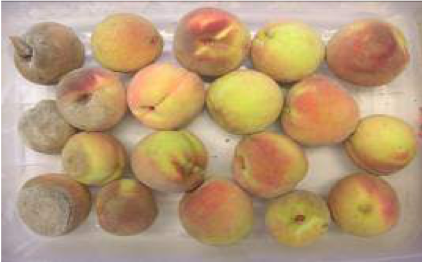 Peaches treated with Pristine