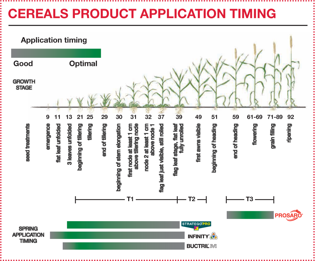 Cereals Product Application Timing