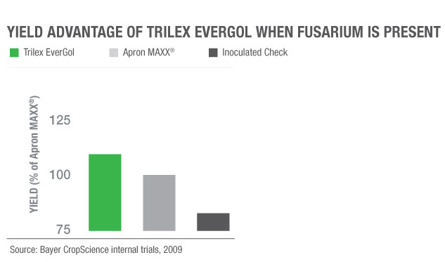 Yield increase of Trilex EverGol vs. Apron MAXX when fusarium present